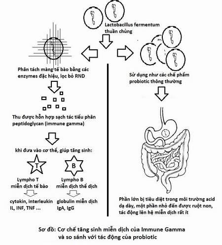"""ImmuneGamma® – """"thần dược"""" cho hệ miễn dịch 1"""
