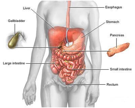 Những triệu chứng cơ bản của hội chứng ruột kích thích 1