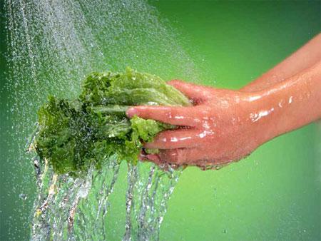 Những loại khuẩn ngộ độc thực phẩm 1