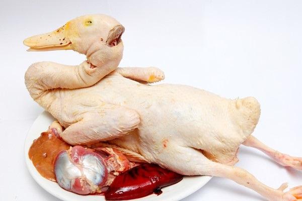 Thịt gia cầm 1