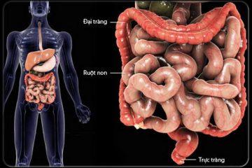 Ung thư đại tràng di căn sang gan – Những điều cần biết