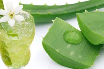 5 cây thuốc nam chữa bệnh viêm đại tràng hiệu quả